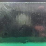Tlačené sklo do interiérových dveří - Nemo