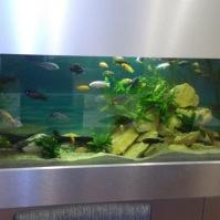 Výroba akvárií 9