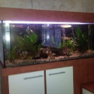Výroba akvárií a terárií 8